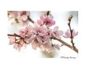 Cherry Blossoms, Nature Photograph, Flower print, 12x8 Photograph, Home Decor, Pink And White