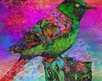 Paradise   bird art print bird painting  bird mixed media archival prints  bird art prints