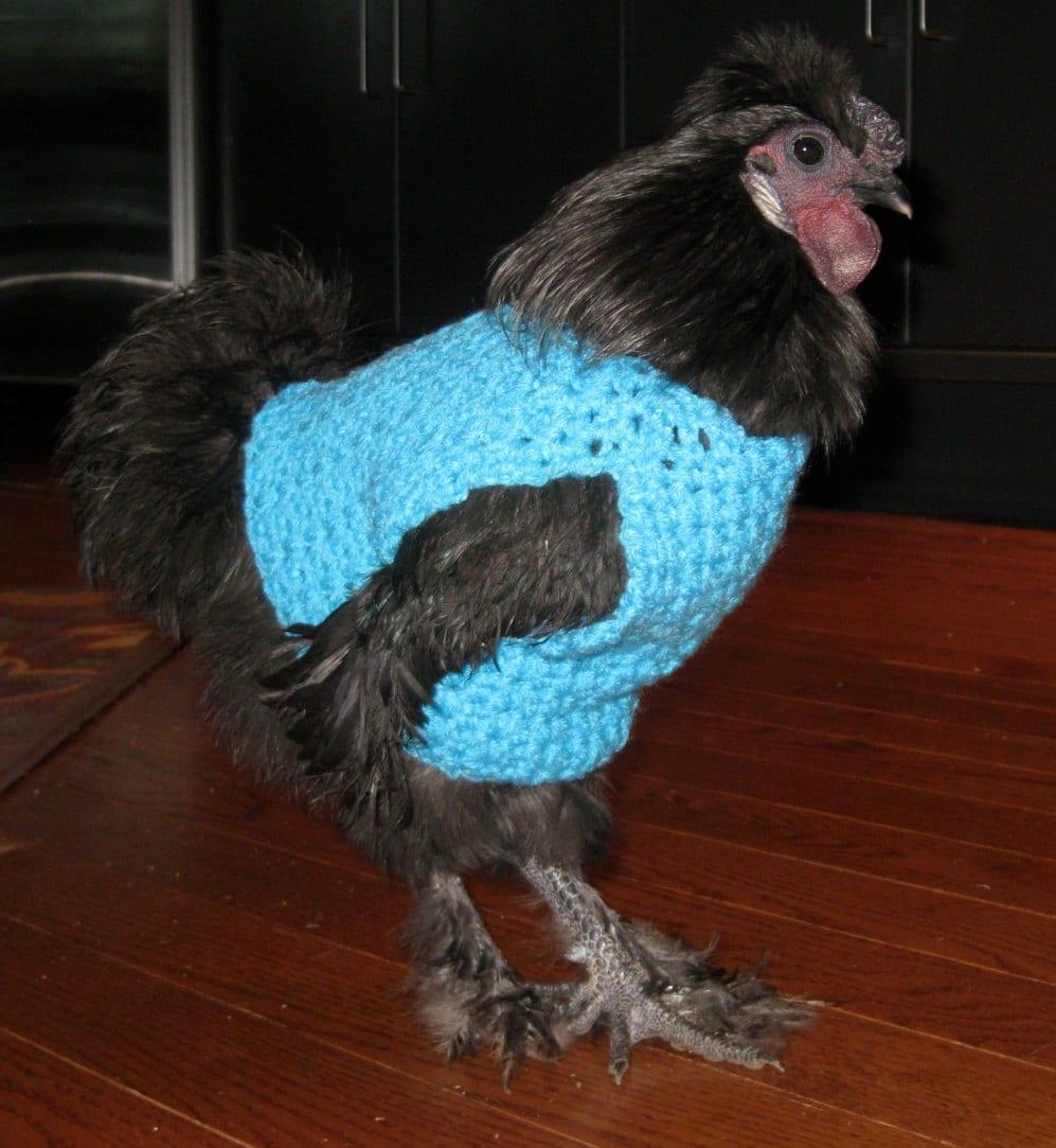 Chicken sweater hen sweater chickens hens by bagsandmorebypam