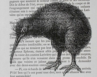 Kiwi Print on Vintage French Book Page - 5 x 7 Kiwi Bird Print
