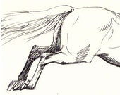 "Horse art original pen & ink horse drawing sketch ""Pasture Leap"""