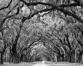 Avenue of the Oaks - Savannah Georgia - Black and white landscape photograph