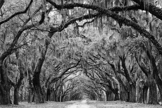 Avenue of the Oaks - Savannah Georgia - Black and white landscape photograph