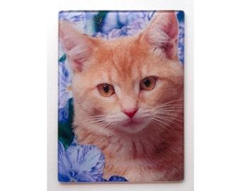 Orange tabby cat glass cutting board, tabby cat glass, tabby cat art, orange cat trivet, cat gift, cat trivet, tabby cat