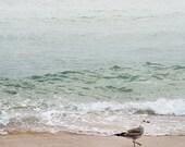 bird seagull ocean waves beach seascape summer vacation nature photo fine art print 8x10 - Strolling