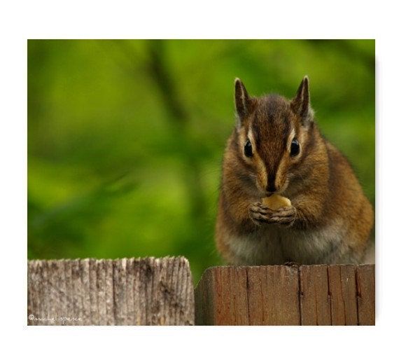 Chipmunk In The Forest Photograph Affordable Home Photography Prints Nature Photography Decor Nature Lover Woodland Scene