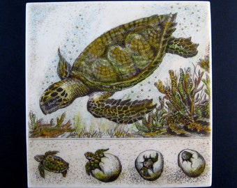 Sea Turtle with eggs and hatchlings  Moosup wall plaque
