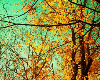 Autumn photography fall leaves  turquoise sky pumpkin orange maple leaves autumn colors Canadian forest opal aqua rust
