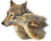"WOLVES called ""Wolf Kiss"" on One 16 inch Square Fabric Panel to Quilt or Sew"