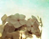 White hydrangea flower photography laundry room art mint green decor light blue sky cottage decor pastel fine art photograph bathroom art