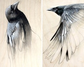 Raven Art Study Set of Two Prints