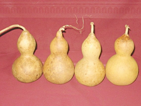 Four Thick Shelled Bottle Snowman Gourds (Item  21)