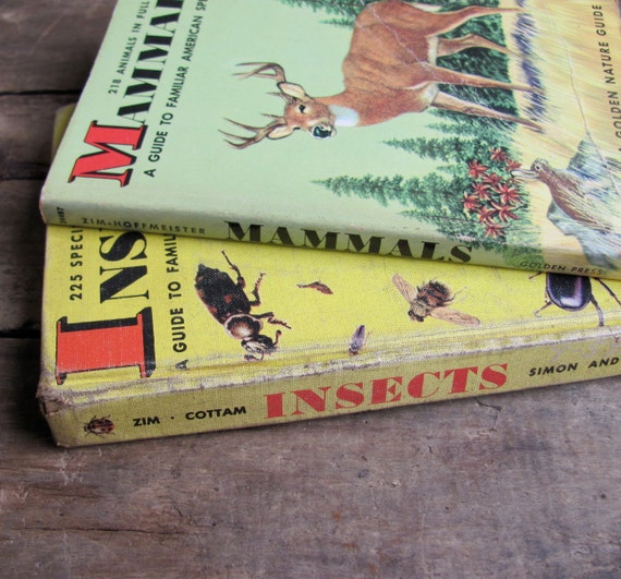 vintage 1950s Golden Nature guide books // Insects & Mammals