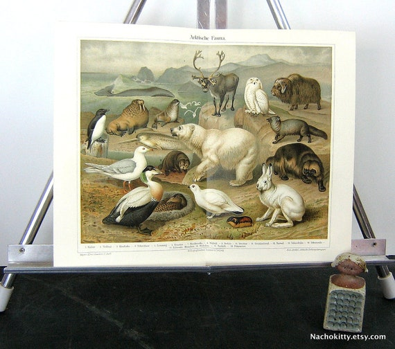 1870s Arctic Animal Chromolithograph Print Vibrant Color
