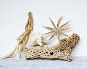 Large Vintage Cholla Cactus Skeleton