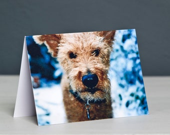 Terrier Dog Christmas Card - Irish Terrier Xmas Card - Dog Christmas Card
