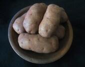 Primitive Folk Art Garden Potatoes E-Pattern Vegetables
