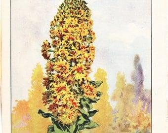 1926 Flower Print - Mignonette - Vintage Home Decor Botany Art Illustration for Nature Science Woman Great for Framing
