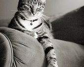 Cat Print, Fine Art Pet Photography, 5x7 Print of Tabby Cat - stephaniemoon