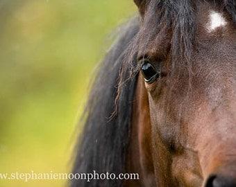 horse Photography, Arabian eye, horse's eye,  fine art equine photography, 8x10