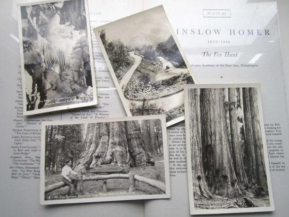 Vintage Sequoia National Park Postcards