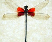 Valentine's Day Gift Hataerina Americana American Rubyspot Real Red Damselfly 8097