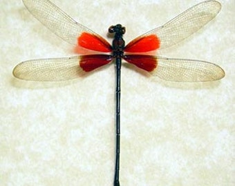Mother's Day Gift Hataerina Americana American Rubyspot Real Red Damselfly 8097