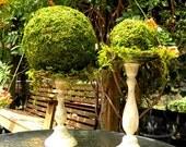 """8"""" Moss Ball- Garden Party decor-Wedding favors-Fairy party-Topiary balls-Kissing Balls"""