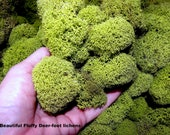 Chartreuse Reindeer moss 1 oz bag-Deer foot moss-Fluffy Lichens-Preserved Lichens-Spring Green Colors in assorted sized spon...