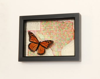 Old Framed Map of Texas with real framed butterfly