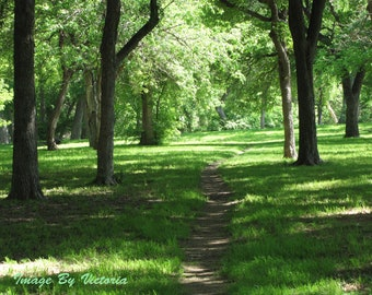 The Path Woodland Altar Art Photo/Into The  Woods We Go / Fine Art Photo Green Forest Nature Photo /Fauna & Flora Woodland Photo -Home Decor