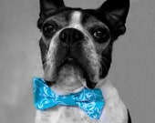 Dog Collar Bow Tie-Teal Blue Damask