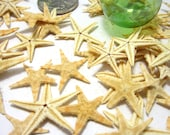 "Beach Decor Small Starfish, .5"" to 1.25"", for Nautical Decor or Crafts - 24 PC Small Brown, Flat"