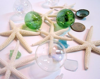 Beach Decor Starfish - Nautical Decor RARE 6 Arm White Starfish, 2-3""