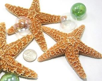 "Beach Decor Starfish - Nautical Decor Brown Sugar Starfish, 3-5"",  6PC"