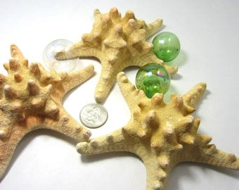 Beach Decor Starfish - Nautical Decor LG Brown Knobby Starfish - 1pc, 4-6in Brown