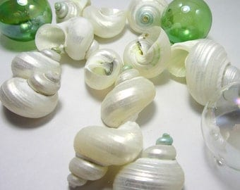 Beach Decor Seashells - White Pearl Turbo Shells for Nautical Decor or Beach Weddings - 6pc