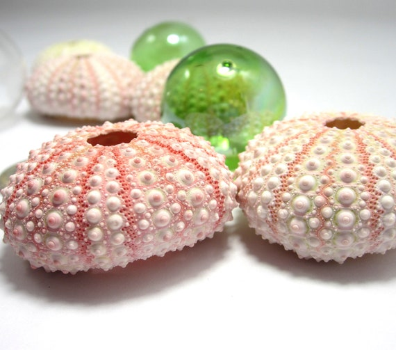 Beach Decor Pink Sea Urchins - Nautical Decor, Beach Weddings or Crafts - Pink, 6pc