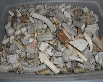 Box of Assorted Deer and Elk Antler Pieces - SFR Full - Stock No. 2-100
