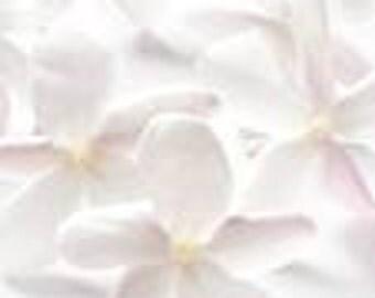 1 oz  Jasmine Fragrance oil