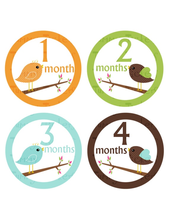 Monthly bodysuit Stickers...Set of 12 Boys...Birds on Branches...Waterproof....Months 1-12 baby milestone sticker month lot baby shower gift