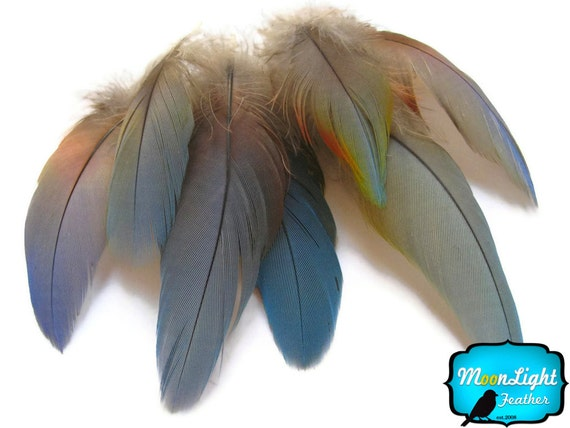 Parrot Feathers, 4 Pieces - SMALL Natural BLUE Scarlet Macaw Rare Feathers : 3301