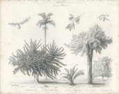 1833, Antique Botanical Engraving, Exotic Plants, Calabash, Betel, Zamia, Tamarind, Botany Plate 19, W. Westall J. W. Lowry