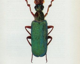 Vintage Spanish Fly, BEETLE Print, Bizarre, Antennae (105) Vladimir Bohac, 1965, Metallic Green, Bug Creepy Crawly, Frameable Art