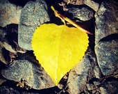 IN STOCK, 50% OFF - Leaf Love Gallery Wrap Canvas Photograph 6x6 - heart yellow gray fall autumn stones square art print home decor room