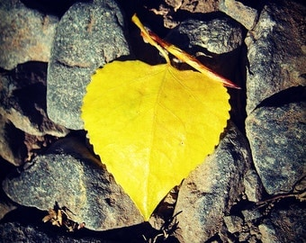 IN STOCK, 60% OFF - Leaf Love Gallery Wrap Canvas Photograph 6x6 - heart yellow gray fall autumn stones square art print home decor room