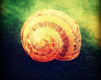 IN STOCK, 60% OFF- Snail Shell Gallery Wrap Canvas Photograph 6x6- nature spiral zen orange green brown art print photo home decor kids room