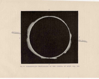 1893 corona photograph original antique celestial astronomy print - total solar eclipse