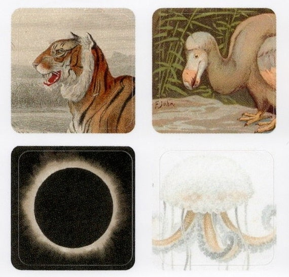 mini stickers - assorted antique images on tiny vinyl stickers - tiger dodo eclipse pterodactyl jellyfish series
