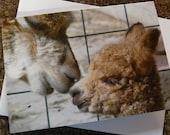 New Baby Alpaca Notecard